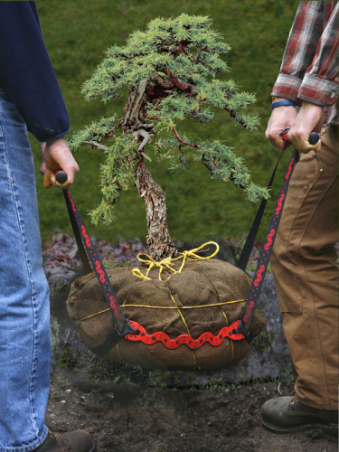Lifting a root ball with a Potlifter